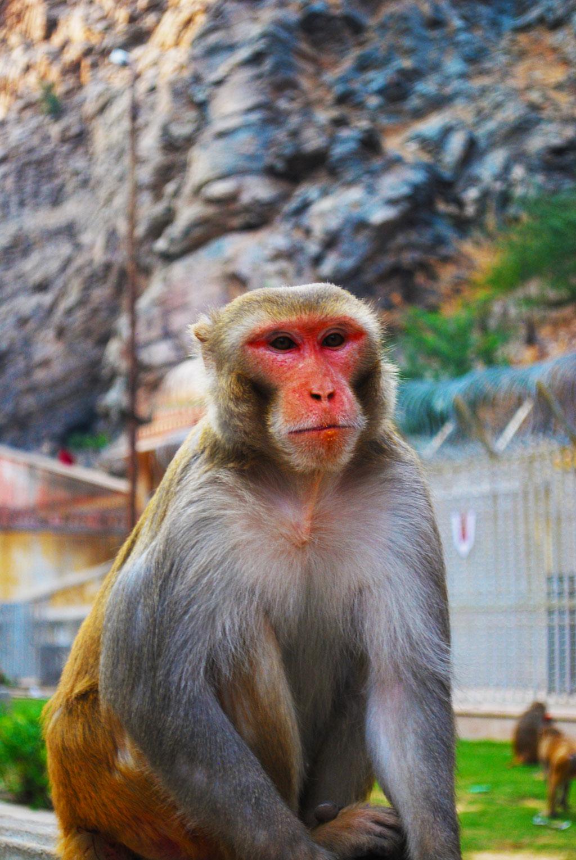 Monkey_2017